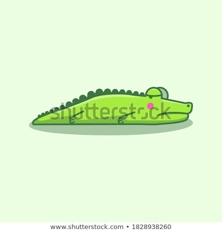 крокодила стороны небольшой рук глаза Сток-фото © OleksandrO