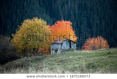 Old house in forest Stock photo © FOTOYOU