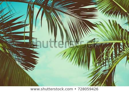 Tree under the sun Stock photo © Novic