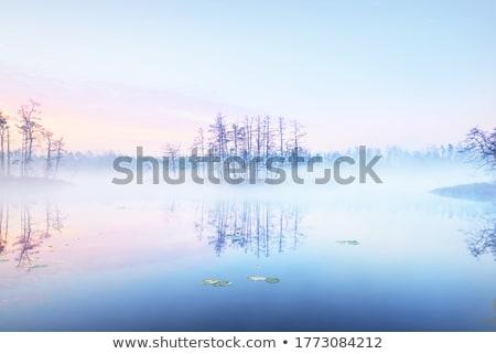 Symmetrie najaar ochtend rivier boom zon Stockfoto © CaptureLight