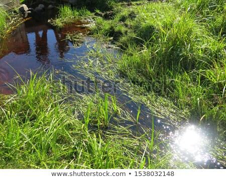 river volga origin stock photo © cosma
