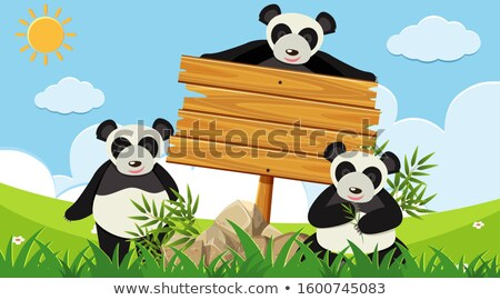 Three pandas and wooden sign Stock photo © bluering
