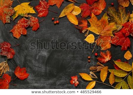 Yellow  autumn leaves  on black chalkboard background Stock photo © Valeriy
