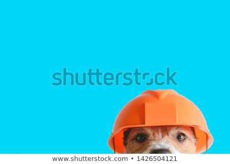 Trabajador progreso ilustración pared herramientas ladrillos Foto stock © adrenalina