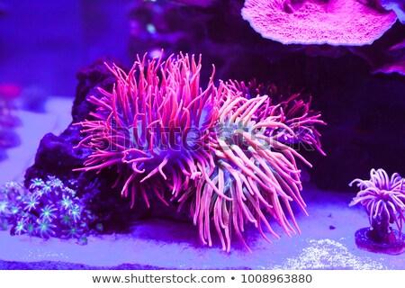 Sahne renkli sualtı örnek doğa Stok fotoğraf © bluering