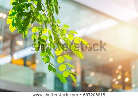 地球 オフィスビル 実例 オフィス 自然 世界 ストックフォト © bluering