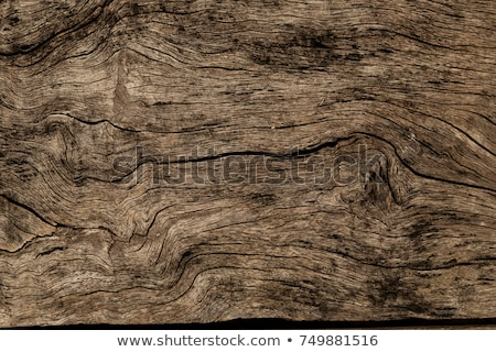 old wooden texture stock photo © oleksandro