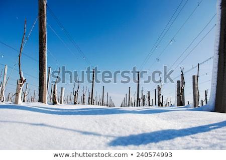 снега · покрытый · пейзаж · зима · белый · винограда - Сток-фото © FreeProd