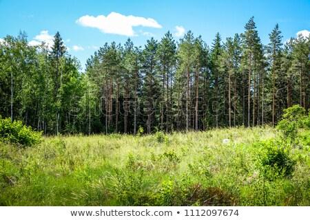 Longo campo de grama Suécia prado fresco ao ar livre Foto stock © IS2