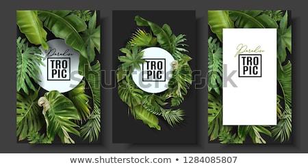 tropikal · palmiye · yaprağı · sınır · vektör · yaz · hurma · ağacı - stok fotoğraf © bluering