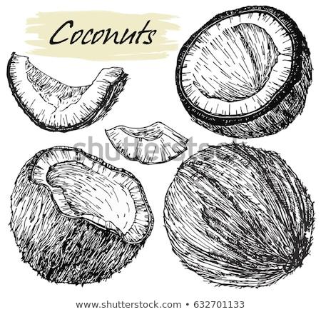 rosolare · cocco · tavola · primo · piano · shell - foto d'archivio © dash