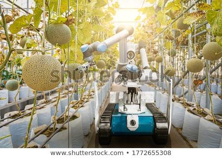 スイカ · メロン · フィールド · 農家 · 調べる - ストックフォト © simazoran