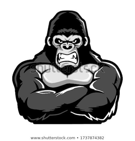 Rajz mérges edző gorilla néz Stock fotó © cthoman