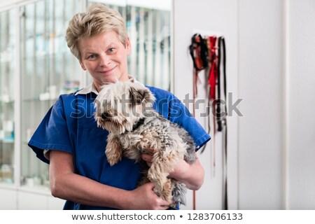 Zdjęcia stock: Dojrzały · lekarz · weterynarii · chorych · szczeniak · uśmiechnięty