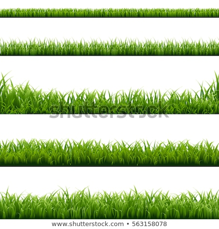 big set green grass borders background white background stock photo © barbaliss