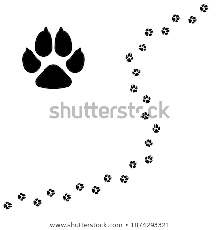 cute cartoon tiger isolated on white background vector illustration in sketch style stylized water stock photo © arkadivna
