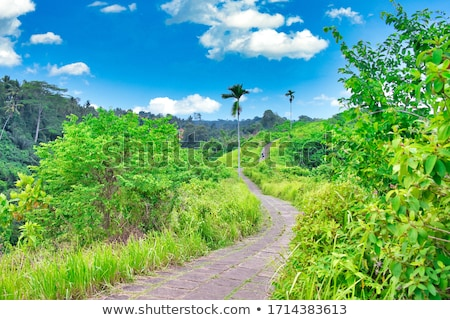 Célèbre marche tropicales vue palmiers détail Photo stock © boggy