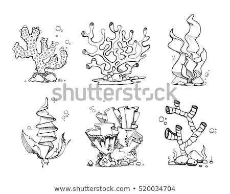 Subacquea organismo alghe doodle vettore Foto d'archivio © pikepicture