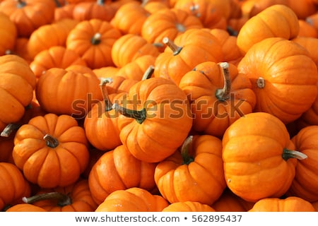gardener growing pumpkins stock photo © kzenon