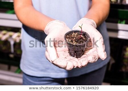 Sera işçi küçük plastik pot Stok fotoğraf © pressmaster