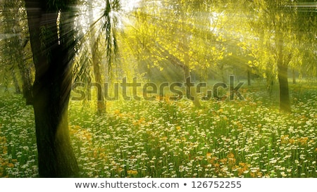 Mystery woods as wilderness landscape, amazing trees in green forest, nature and environment Stock photo © Anneleven