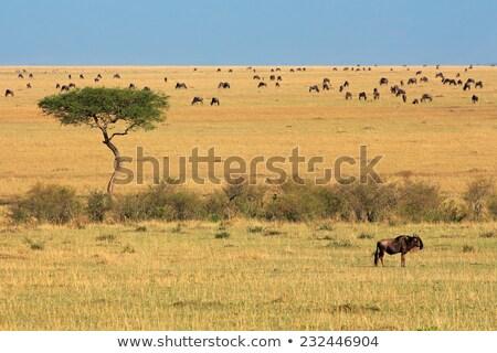 mavi · toz · gündoğumu · çöl · Güney · Afrika · doğa - stok fotoğraf © hedrus