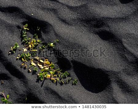 Yosun İzlanda doku kaya Stok fotoğraf © travelphotography