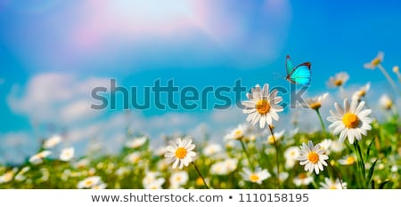 Stock photo: Spring meadow with flowers and butterflies