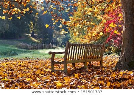 осень скамейке день пусто мебель объект Сток-фото © bobkeenan