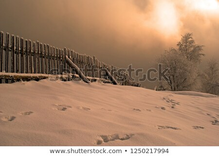 winter trope Stock photo © Paha_L