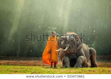 Wild olifant Laos asian bos bos Stockfoto © smithore