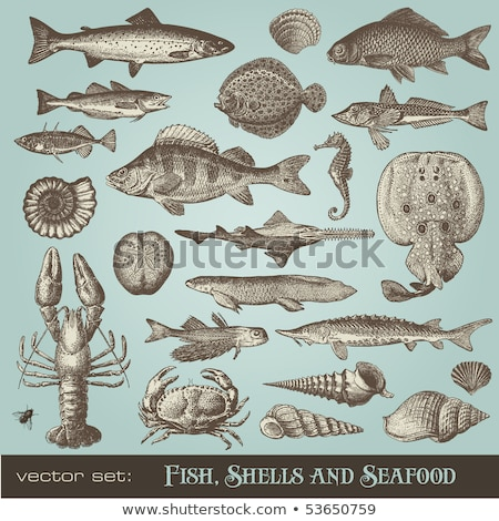 Pike detailed vector illustration Stock photo © Slobelix