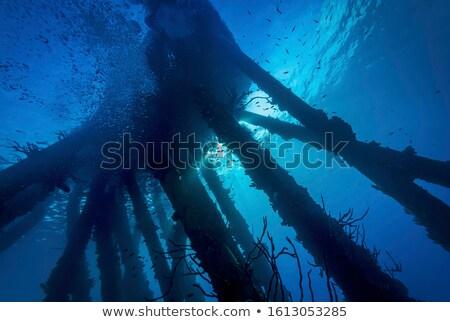 рыбы · аквариум · тропические · рыбы · коралловый · риф · фото - Сток-фото © michaklootwijk