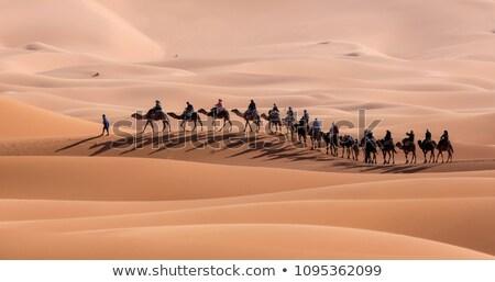 shadow caravan in the sahara stock photo © hofmeester
