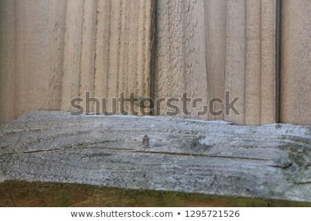 Biały kolor drewna deska tekstury budowy Zdjęcia stock © pxhidalgo
