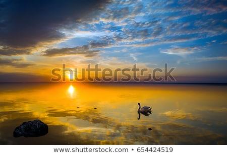 Silueta cisne puesta de sol brillante lago familia Foto stock © shihina