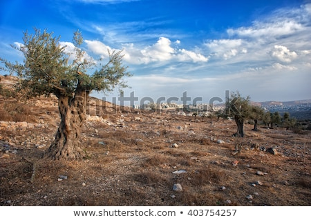 Palestinian village on the hills in Israel. Stock photo © rglinsky77