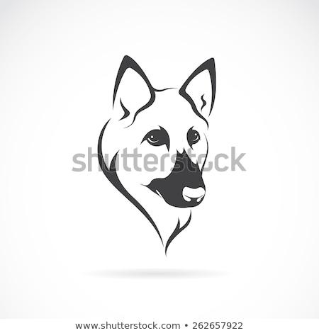 german shepard portrait Stock photo © tiero