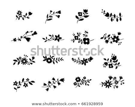 цветок Элементы набор дизайна лист Сток-фото © tiKkraf69