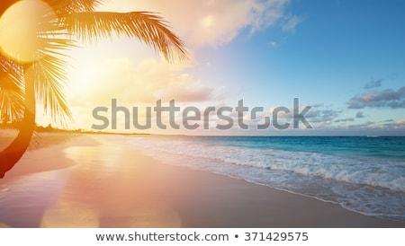 palms and sunrise over sea stock photo © mikko