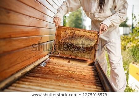 fából · készült · keret · fotó · képek · izolált · fehér - stock fotó © -talex-