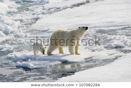 Ijsbeer alarm naar landschap sneeuw opwarming van de aarde Stockfoto © KMWPhotography