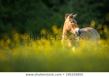 лошади · кобыла · жеребенок · молодые - Сток-фото © lightpoet
