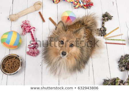 spoiled dog Stock photo © willeecole
