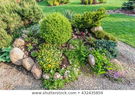 Kő kert különböző növények virágok virág Stock fotó © slunicko