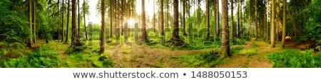 Springtime in the forest Stock photo © olandsfokus