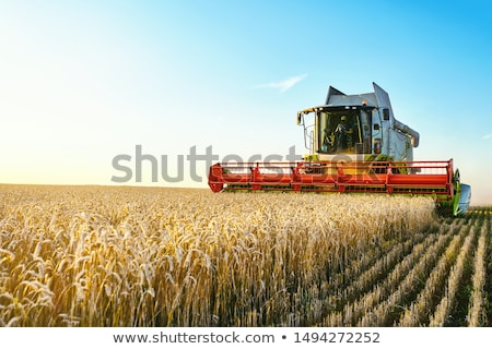 Agricultural field with harvester Stock photo © Aikon