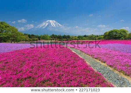 Florescimento campo montanhas primavera paisagem Foto stock © Kotenko