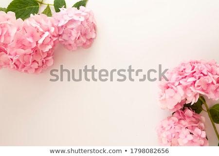 rózsaszín · virágzó · virágzik · makró · közelkép · lövés - stock fotó © mroz