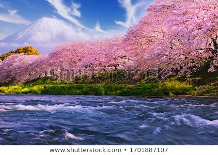 japonês · jardim · flor · flor · de · cereja · casa · beleza - foto stock © Hofmeester